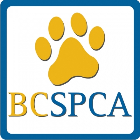 BC SPCA investigates shocking abuse at Chilliwack chicken catching company