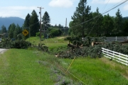 Trees that took out the power lines along the North Fork road by Eagle Ridge; Photo, Mona Mattei
