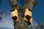 Help save our local bat population and learn to build your own bat house at a workshop on Sunday, March 10 at 1 p.m. in Grand Forks.