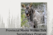 The study ran from Jan. 1 to April 30, 2016, and included observations of more than 500 moose.