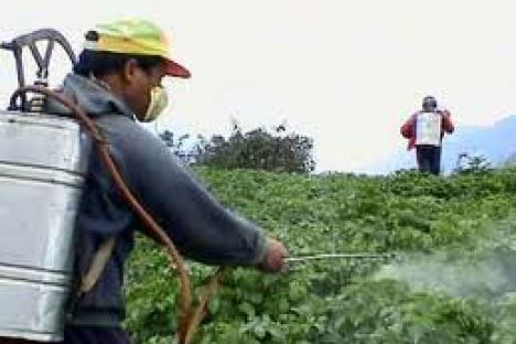 Health organizations launch anti-pesticide campaign