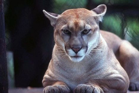 Local conservation officer attacked by cougar near Salmo